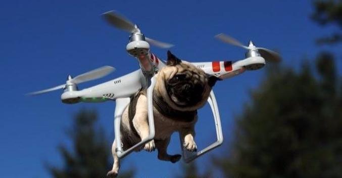 Chien Volant chien volant
