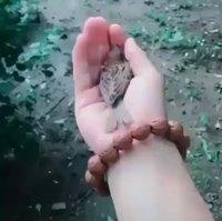 Kan t'as les mains chaudes