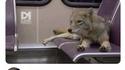 Pourquoi y a un coyote dans le bus ?