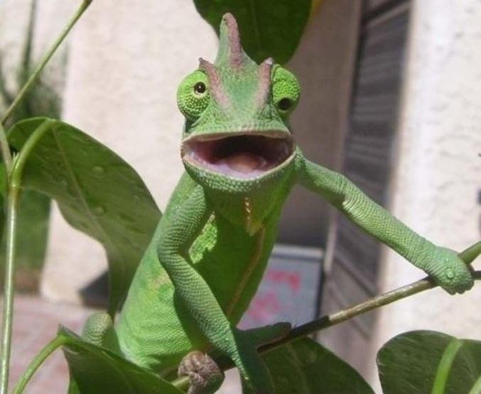 """Résultat de recherche d'images pour """"caméléon yeux"""""""