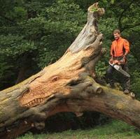 Sculpteur sur bois