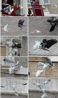 Lâcher de colombes du pape (2014)