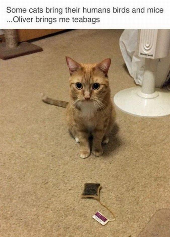 Il y a des chats qui ramènent des oiseaux et des souris à leurs humains. Oliver apporte des sachets de thé.