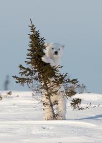 Apprendre à grimper aux arbres