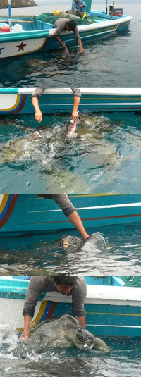 Pêche à la tortue