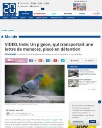 """""""Un pigeon, c'est plus con qu'un dauphin, d'accord... mais ça vole."""""""
