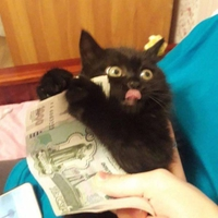 Et en plus ils aiment l'argent !