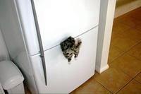 Aimant de frigo original