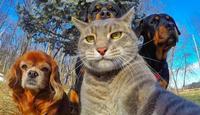 Selfie cat #1