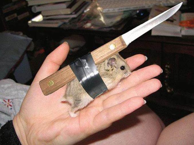 """Une fille qui a appliqué le <a href=""""http://www.lelombrik.net/images/2063/hamster-de-combat.html"""">plan</a> à la lettre."""