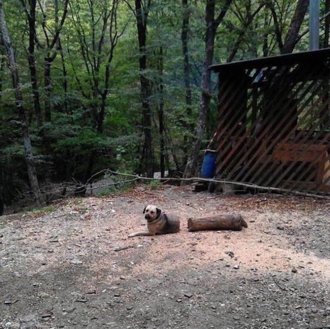 Un demi chien (bon ok sur la photo il ne saigne pas)