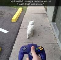 Quand un geek promène son chien