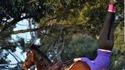 Anulingus Equestre