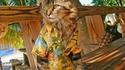 Chat en vacances (Hawaï ?)