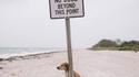 Un chien rebelle