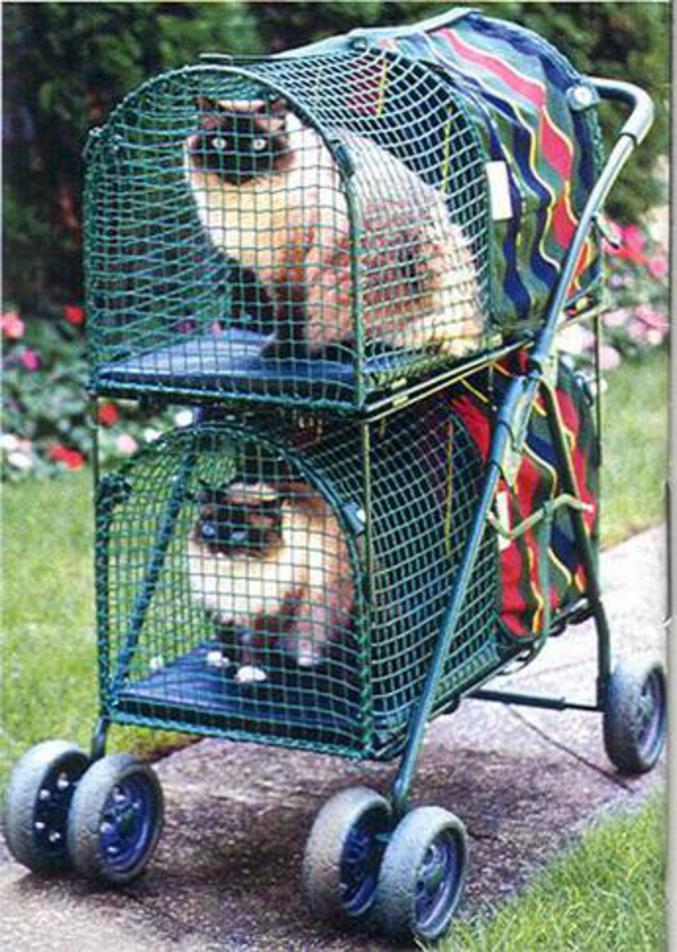Une poussette adaptée aux chats. (Peut servir pour les bébés aussi, à vos risques et périls.)