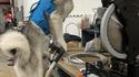 Un atelier qui a du chien