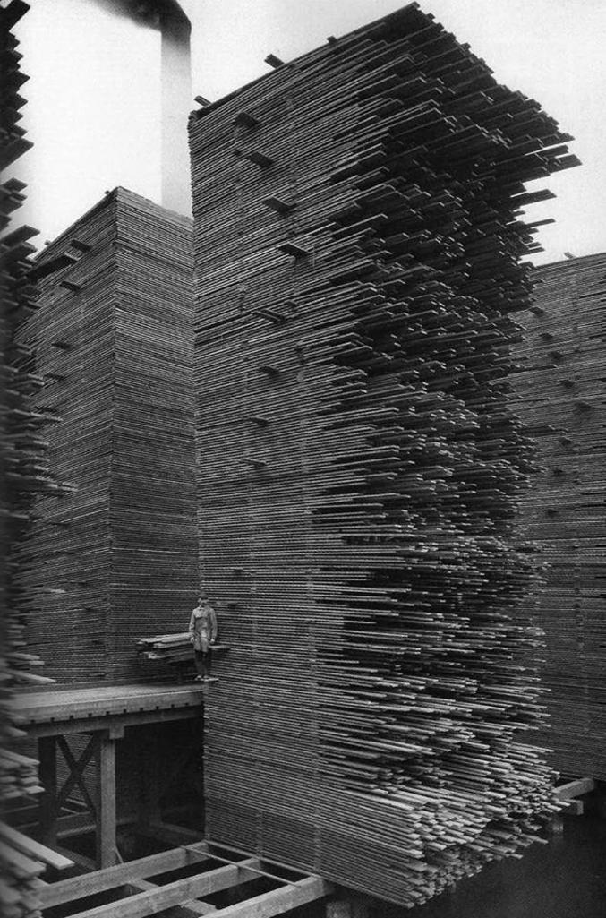 Du cèdre qui sèche (Photo prise à Seattle en 1919)