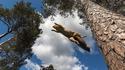 Le vol de l'écureuil