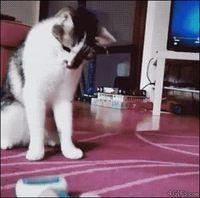 La curiosité tue le chat
