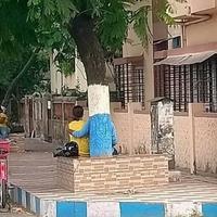 Rare image d'un arbre réconfortant un écolo