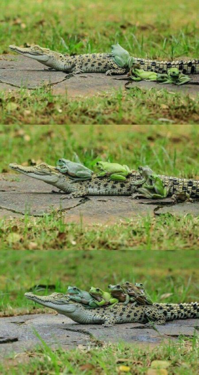 croc-croc motherfu**er !