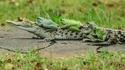 croc-voiturage...