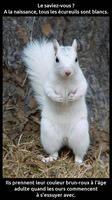 A la naissance, tous les écureuils sont blancs