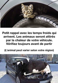 Sauvons nos animaux l'hiver