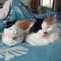 Un chat et son alter ego