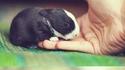 Une histoire de petit lapin