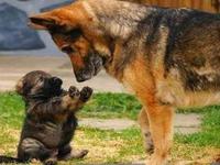 Euh papa, laisse-moi t'expliquer : ce vilain mot, je l'ai appris à l'école !