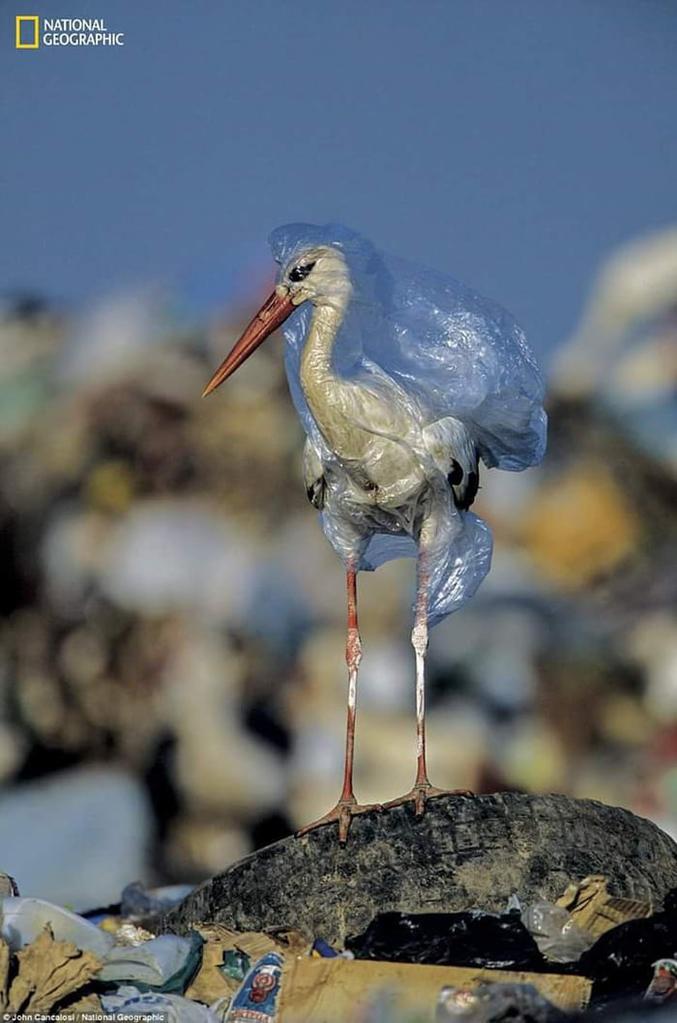 Parce qu'on n'arrête pas le progrès.  Photographie National Geographic.