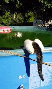 Surprendre un chat au bord de l'eau