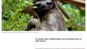 Le caca du paresseux