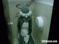 Un lapin aux toilettes