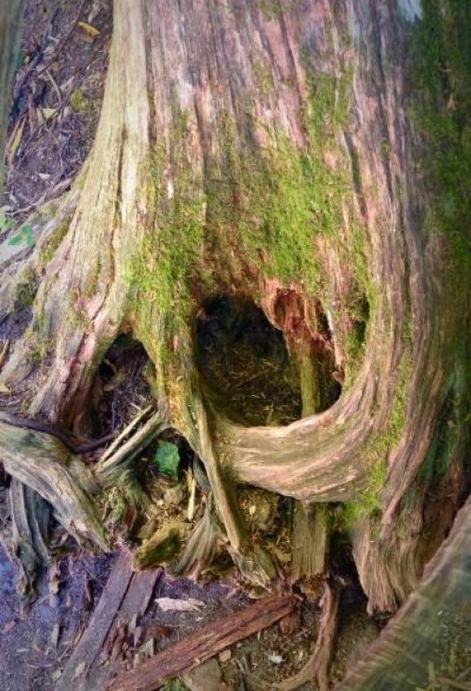 Un arbre.