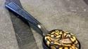 Une petite cuillerée de python ?