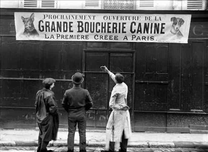 grande boucherie canine