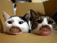 Les chats et leurs dents