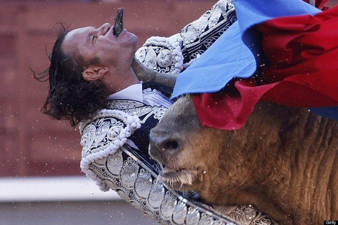 Le torero espagnol Julio Aparicio a été blessé grièvement et de façon spectaculaire vendredi soir à Madrid par un taureau dont la corne est entrée par le bas de sa mâchoire et ressortie par sa bouche.