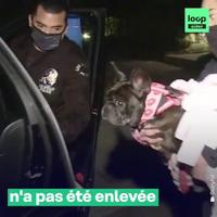 Dog sitter de star métier à haut risques