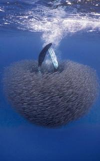 Dernière image d'un plongeur