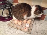 Qui, de l'œuf ou de la poule est le premier?