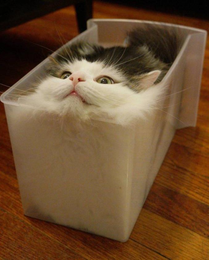 les chats étant liquides, voici une magnifique boîte à chat étanche pour ranger facilement vos chats !