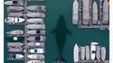 Avez vous déja vu une baleine chercher une place de parking?