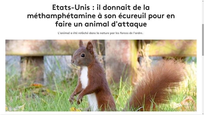 Les pitbulls, ours, tigres et compagnie c'est dépassé, pour imposer le respect le nouveau must-have c'est l'écureuil.  https://www.francetvinfo.fr/animaux/etats-unis-il-donnait-de-la-meth-a-son-ecureuil-pour-en-faire-un-animal-d-attaque_3497431.html