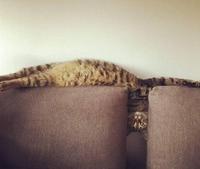 Les chats étant liquides