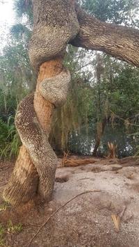 Tronc sur tronc