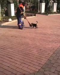 Le chat et le balayeur